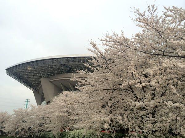 埼スタの桜