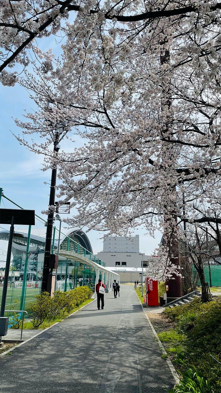 埼スタの桜 - 2021 Jリーグ YBC ルヴァンカップ グループステージ 第2節 埼玉スタジアム2002 柏レイソル戦